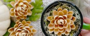 Kwiaty z pistacji – twórcze wykorzystanie łupinek